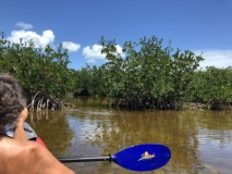 Kayaking mangrove lake