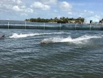 Dolphins' speed run