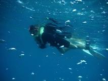 Paula snorkeling