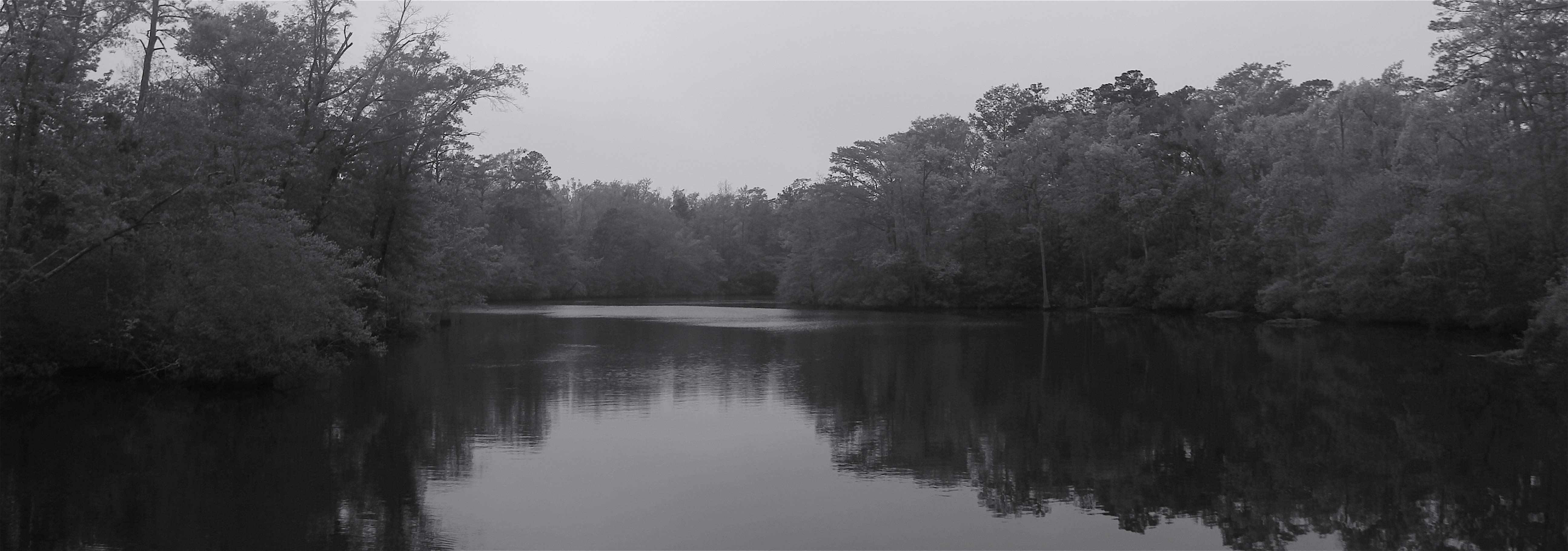 Dismal Swamp 2