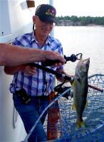 Ron's fish