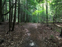 Trail to cedar grove