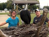 Eagles in Havana